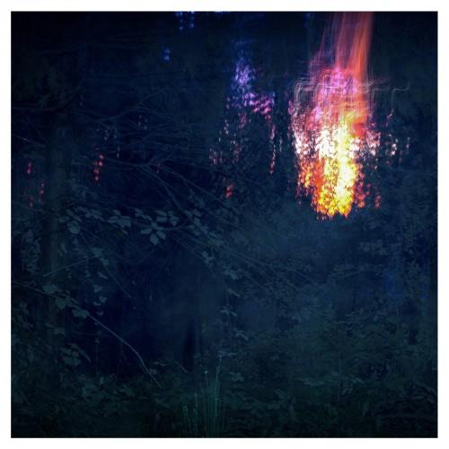 betacicadae album cover