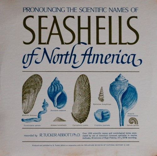 seashells of north america album cover