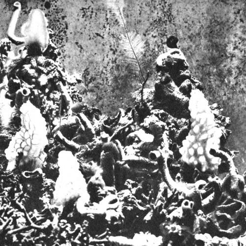 donato epiro - fiume nero album cover