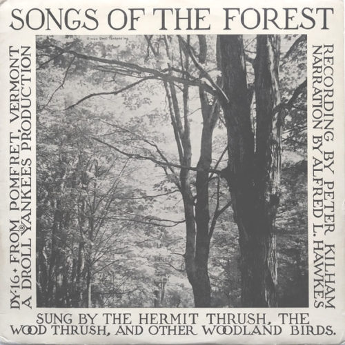 songs of the forest album cover